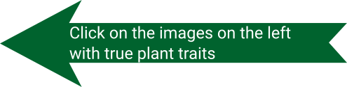 Click on the images on the left with true plant traits